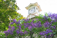 Clock Tower and lilac Stock photo [1945032] Flower