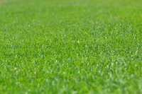 Lawn Stock photo [2048071] Chicago