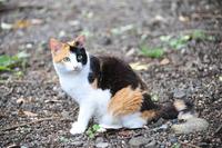 Calico Stock photo [2051841] CAT