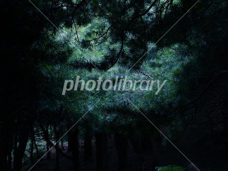 ��ʤ��Ť�����ޥ��ο�-stock photo