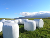 Plateau and grass roll Stock photo [58114] The