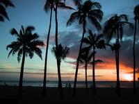 Tree of dusk of palm Stock photo [60952] Palm