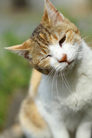 A little upset feeling of cat Stock photo [2150166] CAT