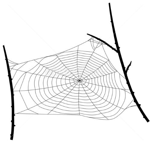 巣 蜘蛛 の