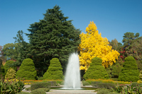 Autumn of Botanical Gardens Stock photo [2266056] Cedar