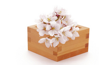 Cherry blossoms Stock photo [2276246] Sakura
