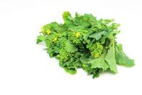 Spring vegetables Nanohana Stock photo [2400806] Cauliflower