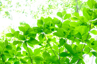 Fresh green Stock photo [2404014] Fresh