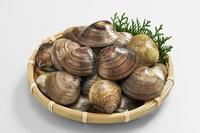 Active clam Stock photo [2404679] Active