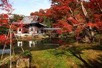 Autumn leaves of Kodai-ji Temple Stock photo [2407421] Kodai-ji