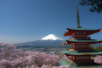 Fuji and cherry and five-story pagoda Stock photo [2407650] Mt.