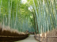 Kyoto Arashiyama bamboo forest Stock photo [2515073] Arashiyama