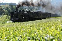 Run a tea plantation C56 Stock photo [2515893] C56