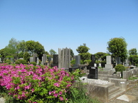 Yabashira cemetery and azalea Stock photo [2516173] Yabashira