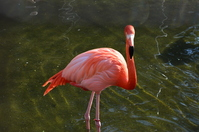 Flamingo Stock photo [2522373] Flamingo