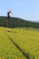 Landscape there is Muta Plateau your tea plantations and Boshimo fan Gil Stock photo [2522883] Tea