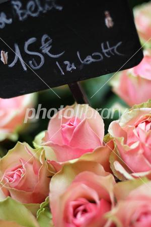 �ѥ�Υޥ륷���Τ��ֲ����� �����-stock photo