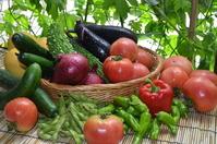 Summer vegetables variety Stock photo [2639917] Harvest