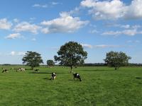Hokkaido Betsukai of pasture Stock photo [2640388] Ranch