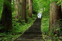 Haguro cedar and stone steps Stock photo [2641445] The