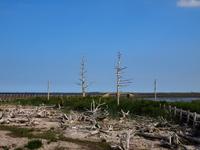 Dead tree of Todowara Stock photo [2643034] Hokkaido