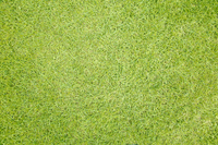 Background material of lawn Stock photo [2643253] Chicago