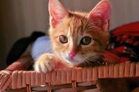 CAT Stock photo [2730189] Kitten