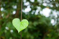 Leaves in the shape of heart Stock photo [2731048] Hart