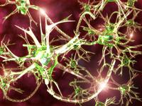 Synapse [2806169] Synapse