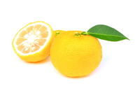 Citron Stock photo [2807065] Citron