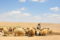 Nomads of Syria desert Stock photo [2808496] Syria