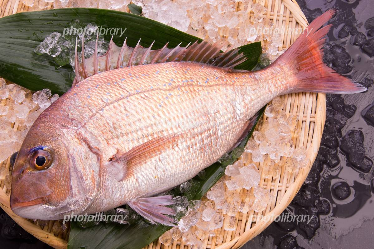 Natural red snapper Photo