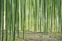 Of bamboo forest alley Stock photo [2892531] Bamboo