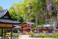 Fuji of Kyoto Saiinkasuga shrine Stock photo [2894425] Saiinkasuga