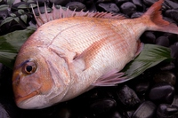 Natural red snapper Stock photo [2897058] Red