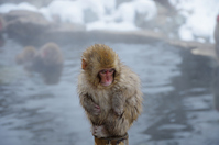 Snow Monkey Stock photo [2897911] Snow