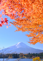 Autumn landscape from Kawaguchiko shores Stock photo [2899290] Mt.