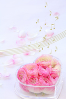 Pink ranunculus and music of synthesis in a box of heart Stock photo [2900909] La