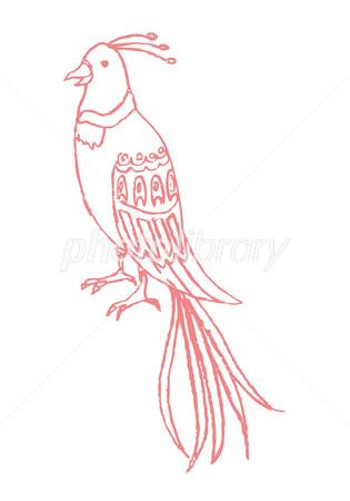 手書き風 鳥 クジャク イラスト素材 2982570 フォトライブラリー