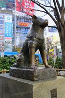 Faithful dog Hachiko Stock photo [2975718] Hachiko