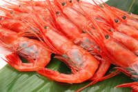 Whirlpool sweet shrimp bamboo put up Stock photo [3065681] Sweet