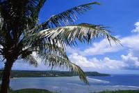 Palm tree Stock photo [92956] Trees