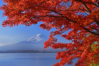 Autumn of Lake Kawaguchi and Mount Fuji Stock photo [3154449] Lake