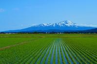 Of June paddy and Mt.Chokai Stock photo [3155243] Tohoku