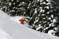 Powder ski Stock photo [3156633] Powder