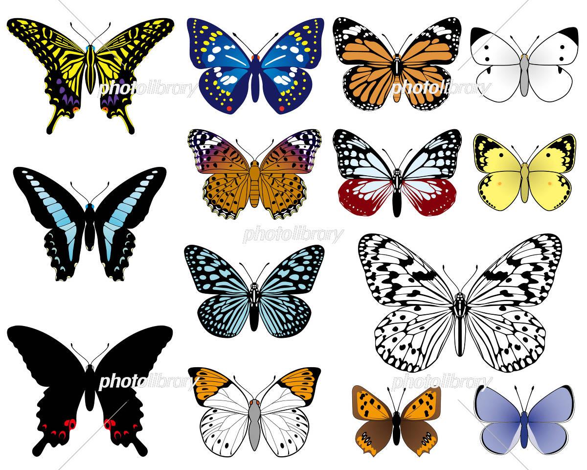 日本の蝶 イラスト素材 [ 3262038 ] - フォトライブラリー photolibrary