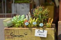 Succulent plants Stock photo [3257024] Cactus