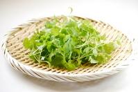 Fresh coriander Stock photo [3360898] Fresh