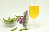 Draft beer and hamster Stock photo [3362401] Beer