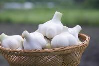 Harvest of garlic Stock photo [3445490] Garlic